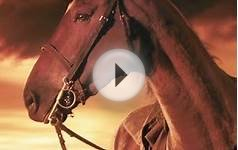 2012 Academy Awards: War Horse movie among predicted Best