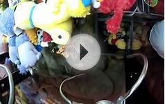 CLAW MACHINE MOST WINS EVER!!